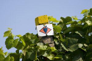 Ortenauer Weinpfad Teil 2 @ Bühlertal | Baden-Württemberg | Deutschland